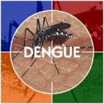 dengue cible.jpg